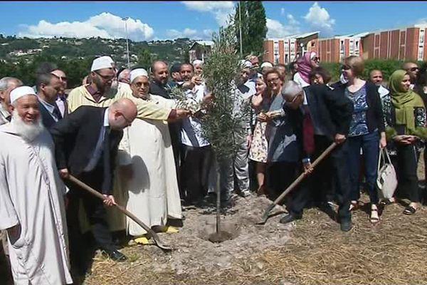 """Un """"olivier de la paix"""", à l'emplacement de la future mosquée."""