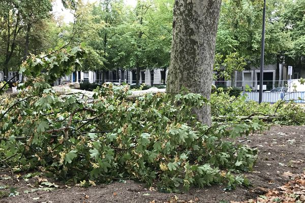 En tout, une centaine d'arbres doivent être abattus au niveau des Basses-Promenades à Reims