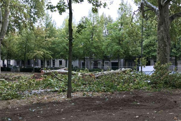 Selon la municipalité, les arbres sont malades et doivent être abattus