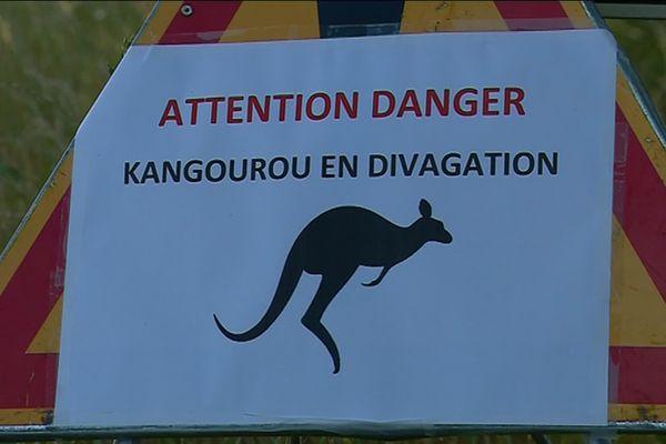 À Reffannes, dans les Deux-Sèvres, le kangourou court toujours