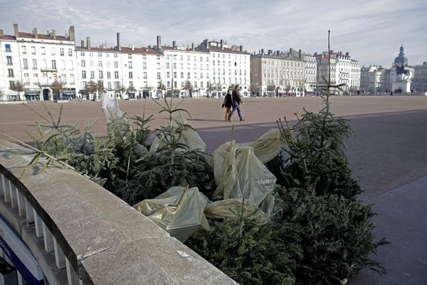 Les points de collecte de sapins ouvriront ce lundi 4 janvier sur la métropole de Lyon.