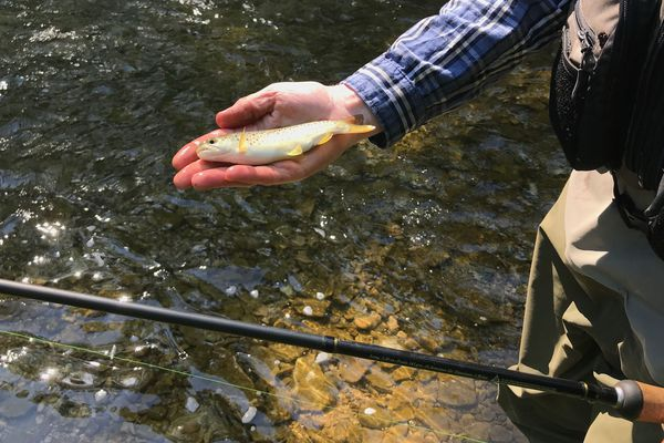 Après deux mois sans pêche, les poissons sont plus gros que les années précédentes dans les cours d'eau hauts-marnais.