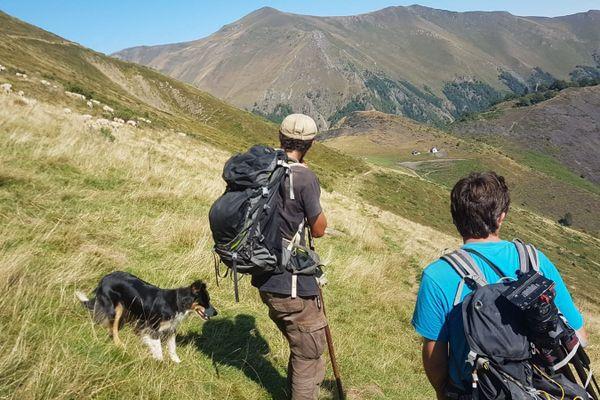 Un berger et son chien sur l'estive d'Ourdouas près de Sentein en Ariège (26 août 2020)