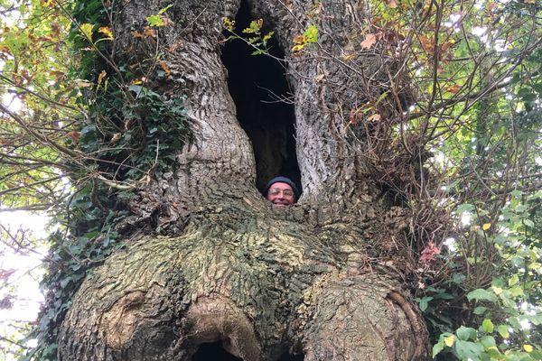 Christophe Desportes, médecin généraliste s'est glissé dans un arbre, pour marquer son désaccord sur la façon dont est traitée la santé