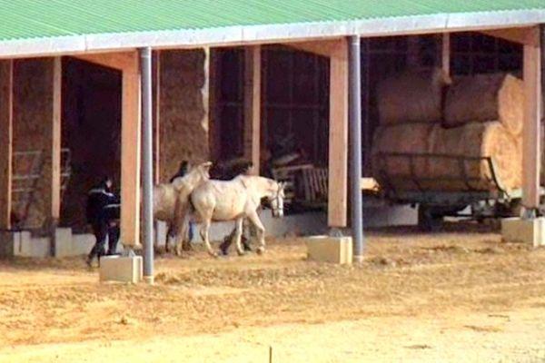 Le 26 mars, les services vétérinaires ont saisi 4 juments
