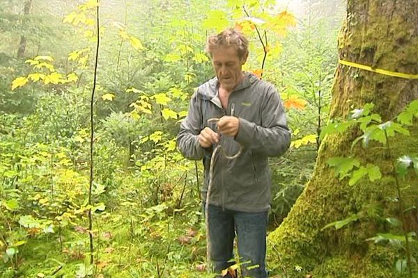 Les cueilleurs grimpeurs passent à l'action dans les forêts jurassiennes