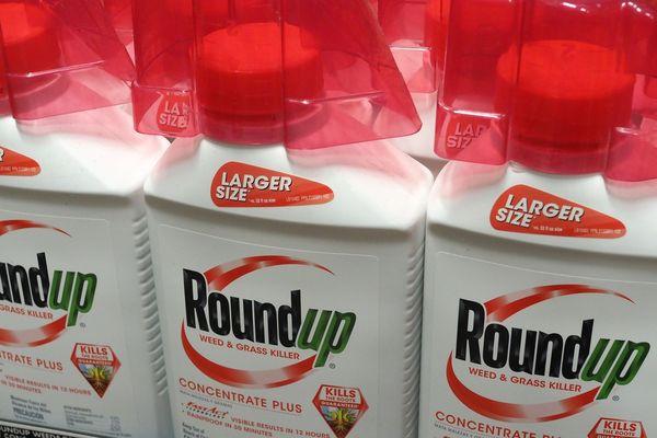Le Roundup, l'un des plus tristement célèbre produits contenant du glyphosate.