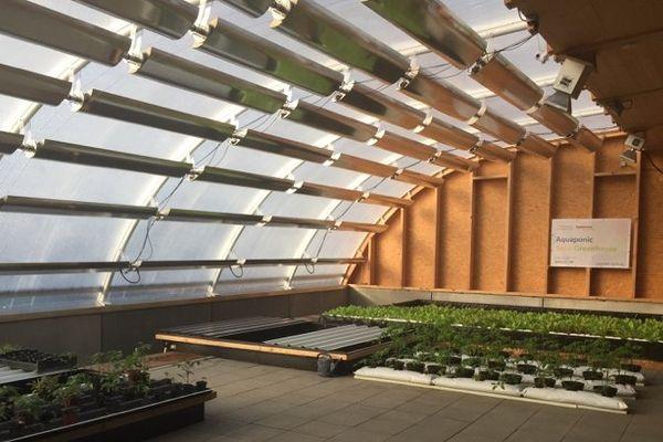 La surface exposée à la lumière du jour de la serre est couverte de panneaux solaires