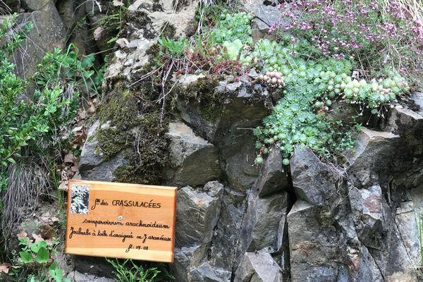 Nom latin, nom usuel et photo plastifiée, ces panneaux permettent  de distinguer ces plantes sauvages.
