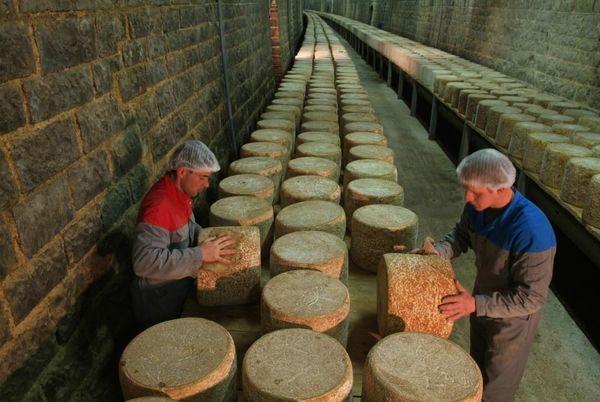 Les affineurs doivent retourner et frotter les fromages plusieurs fois par semaines. Plusieurs milliers de fromages peuvent être entreposés dans le tunnel de la fromagerie des Monts du Cantal.