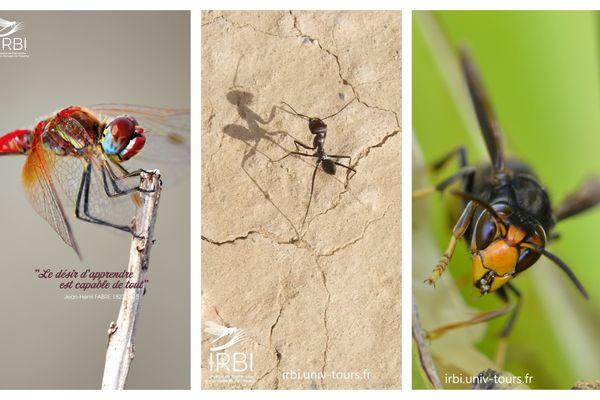 A l'IRBI, 60 ans de recherches passionnantes sur les insectes et leur environnement / © IRBI