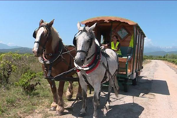 Aurélie a du suivre une formation pour faire ce tour de France en roulotte tractée par deux chevaux - mai 2019