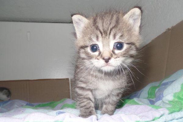 Un chaton sauvé par l'ASPA.