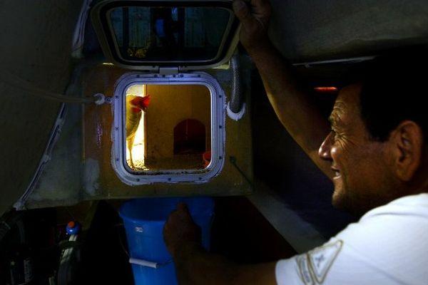 Mateo Miceli est parti dimanche de Rome avce ses poules pour une circumnavigation calquée sur le parcours du Vendée Globe