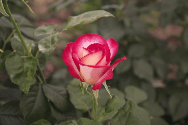 """""""Une vie en rose"""", un film de Camille Béglin diffusé le 22 mars 2021 à 22h50 sur France 3 Provence-Alpes-Côte d'Azur."""