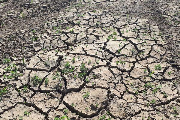 Jeudi 29 août, la préfecture du Cantal a annoncé le renforcement des restrictions d'eau en raison de la sécheresse.