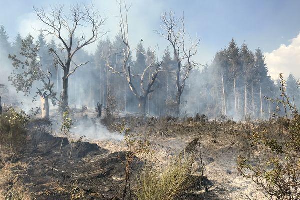 A Escoutoux, un incendie a détruit plusieurs hectares mardi 23 juillet.