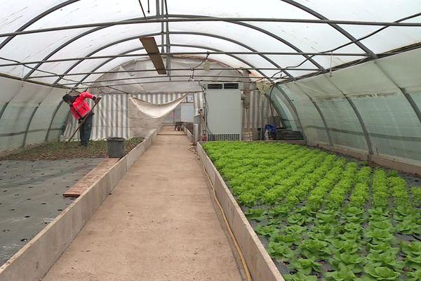 À Gauchy dans l'Aisne, c'est Eric, le jardinier municipal, qui cultive les légumes qui seront servis à la cantine de la commune.