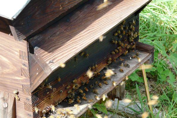 La ville de Noyon lance un appel aux apiculteurs pour l'installation de ruchers sur le domaine municipal.