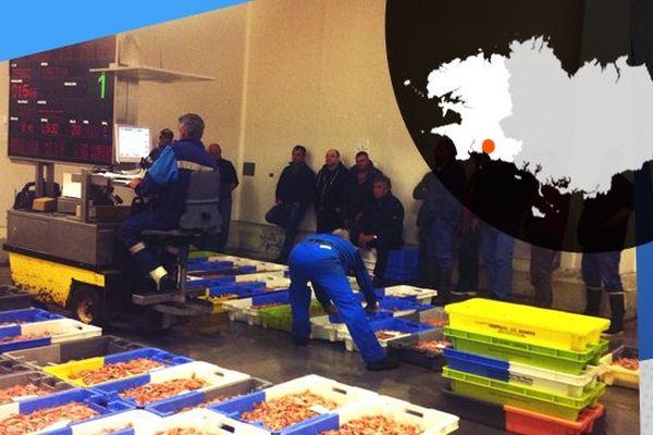 Les pêcheurs participent à la criée de Concarneau, dès 6h du matin