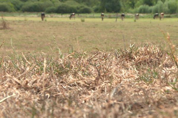Les mesures se succèdent pour lutter contre la sécheresse qui touche la Picardie.