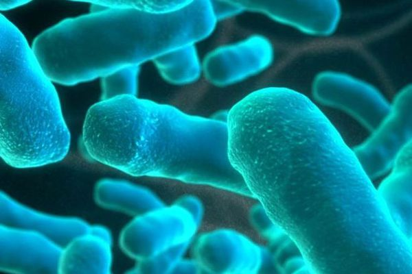Bactérie listéria - archives