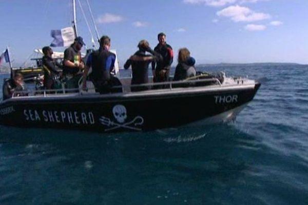 L'association écologiste Sea Shepherd, au large de Cannes, le 26 août 2015