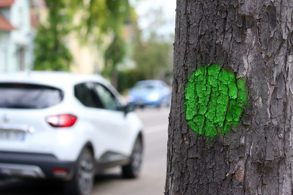 Des ronds verts sont effacés tous les jours, depuis lundi 10 août, par les services de la mairie de Besançon.