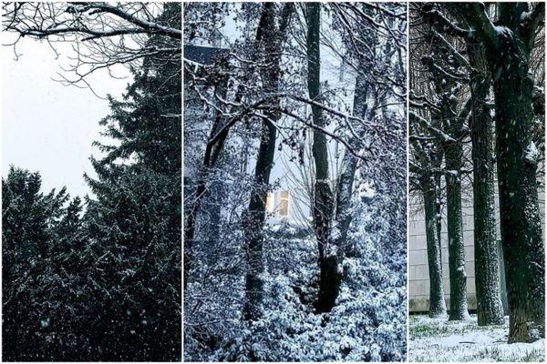 À Reims, des arbres recouverts de neige.