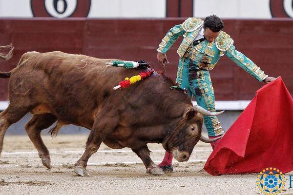 Madrid, 21 mai. Toro de Las Ramblas. Traslúcido ne s'emploie guère, mais la naturelle de Ferrera est une merveille.