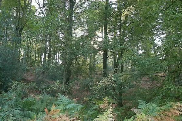 Le 16 novembre dernier, le corps d'Elisa Pilarski était retrouvé mortellement attaquée par des chiens en forêt de Retz dans l'Aisne.