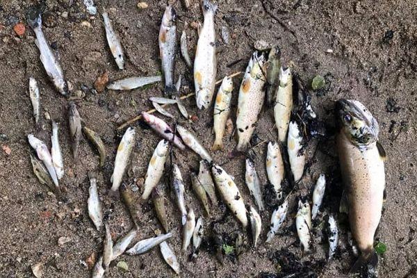 Plus de cinquante poissons ont été prélevés de la rivière pour analyse.