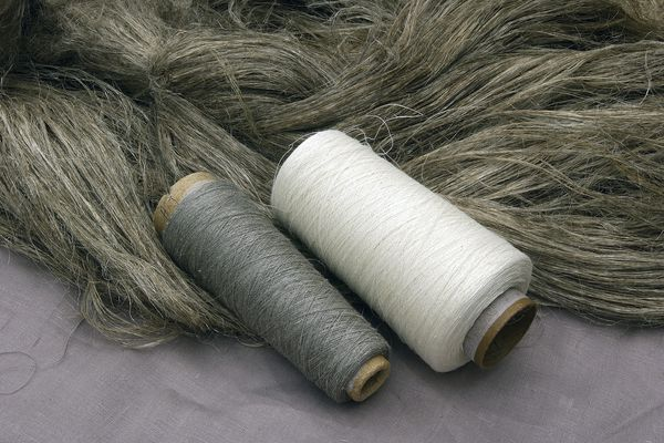 Le lin est une plante cultivée pour sa fibre et un usage textile.