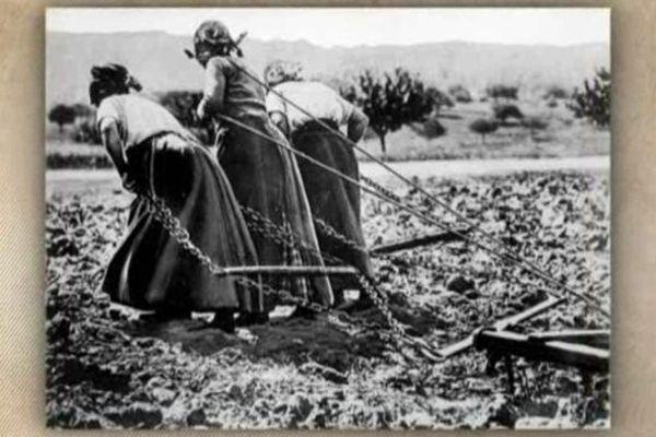 14-18 les femmes dans les champs