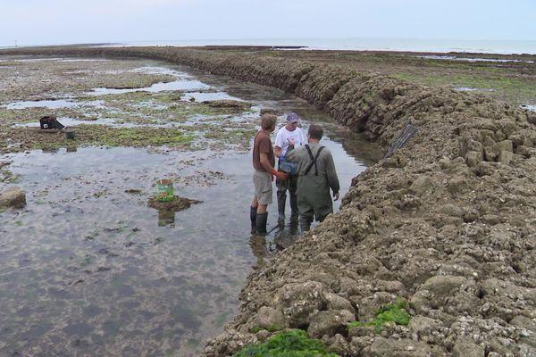 Douze écluses sont encore en activité sur l'île de Ré et dix-sept sur Oléron