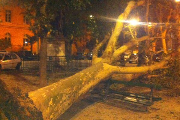 De nombreux arbres abattus par les rafales comme ici place du Salin à Toulouse