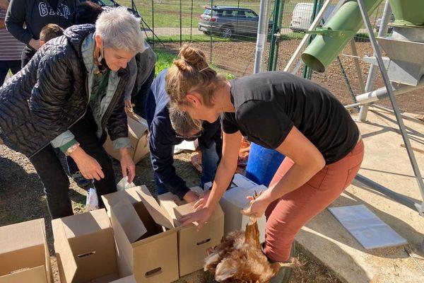 Dans l'Essonne, une ferme vend ses poules à des particuliers pour leur éviter l'abattoir