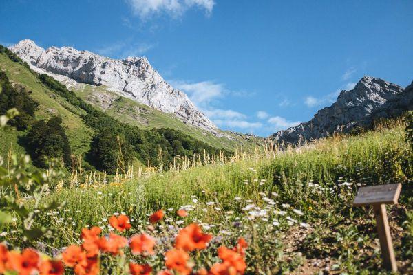 Le domaine est situé à 1400 mètres d'altitude ,dans les Aravis