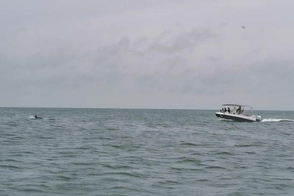 Pour sa première sortie à Saint-Aubin-sur-mer avec son Tringaboat la famille Grondin a eu la chance de pouvoir observer des dauphins!
