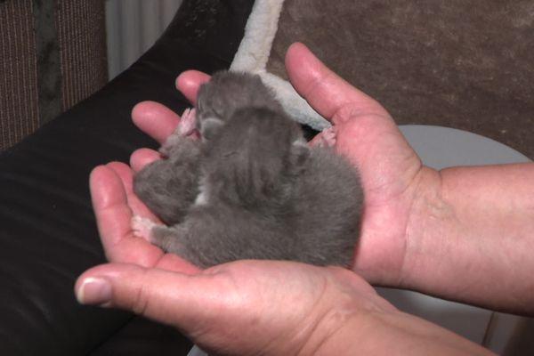 Les chatons ont été récupérés par le Chat-Libre Dijonnais