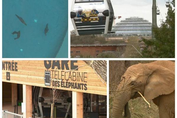 Nouvelle attraction au Zoo-parc de Beauval ! Une télécabine qui monte en silence jusqu'à 45 mètres de hauteur. 25 mars 2019 - Loir-et-Cher