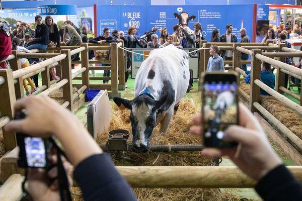Salon international de l agriculture a la porte de Versailles - Animaux présentés au public