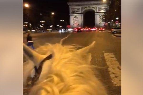 Balade à Paris pour le cheval Camargue