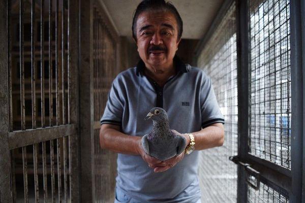 Le 25 mars 2019 à Manille, Jaime Lim, célèbre colombophile aux Philippines, pose avec un de ses pigeons de course.