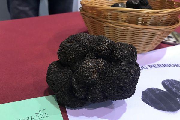 """1er marché aux truffes à Brive, 7 kilos d'""""or noir"""" ont été proposés à la vente"""