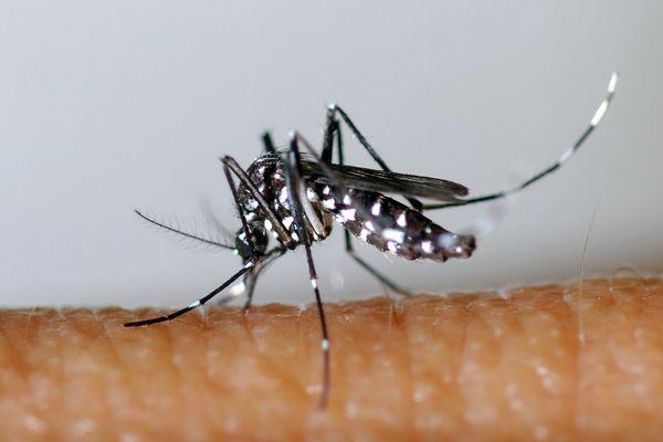 La dengue se transmet de personne à personne par l'intermédiaire de la piqûre d'un moustique-tigre infecté par le virus de la dengue).