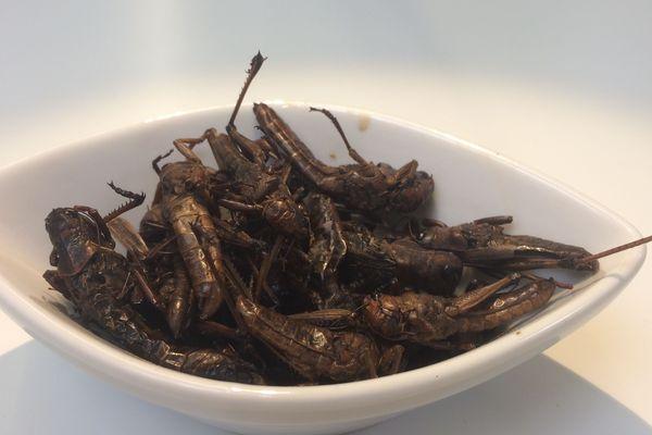 les sauterelles Nsenene sont un apéritif trés apprécié en Ouganda