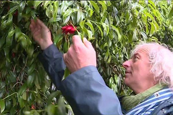 Jean Thoby et l'un de ses 2 000 camélias, dont son jardin botanique dans les Landes.