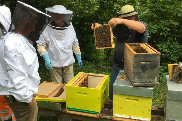 Au rucher école de Ribeauvillé, les apiculteurs étaient globalement satisfaits de la décision prise par l'UE.