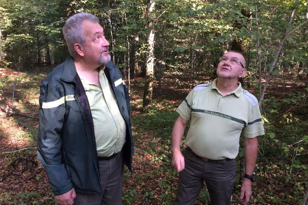 Les agents ONF s'inquiètent pour la forêt et les conséquences de la sécheresse.